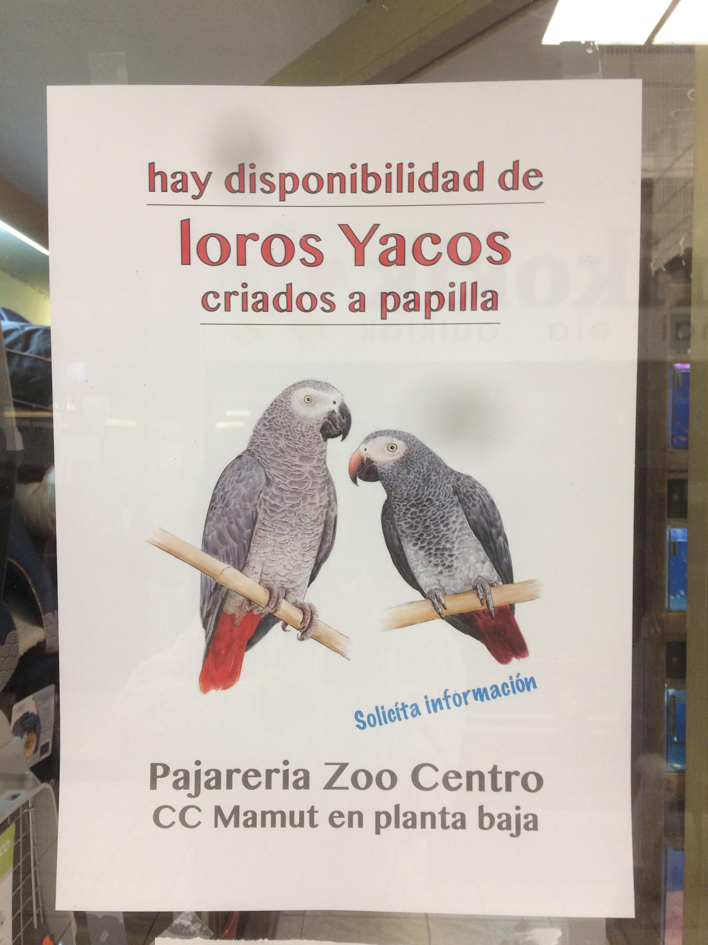 Los periquitos son las aves domesticas mas demandadas